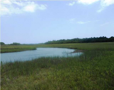 Shell House Homes For Sale - 0 Point Of Pines, Edisto Island, SC  - 1