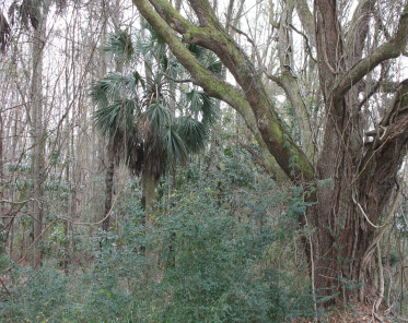 Hollywood Lots For Sale - 0 Highway 162, Hollywood, SC  - 1